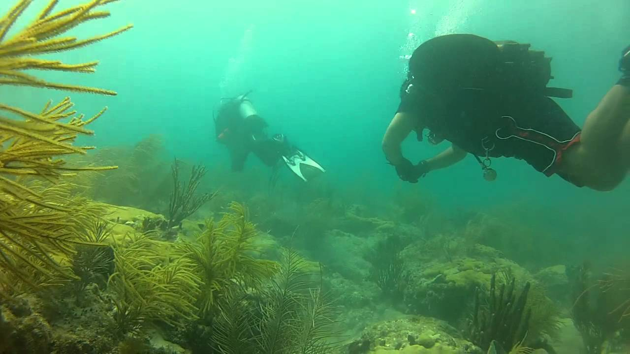 Underwater video archives agua clara project diving in miami beach reef scuba diving full video hd xflitez Choice Image