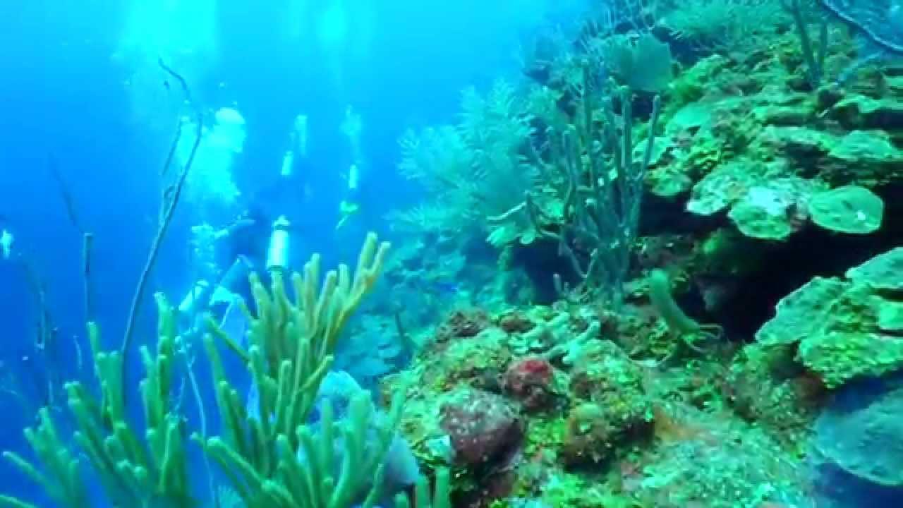 Great blue hole belize diving version