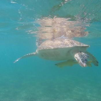 Kelly Bacon, Snorkeling Tour, Damian