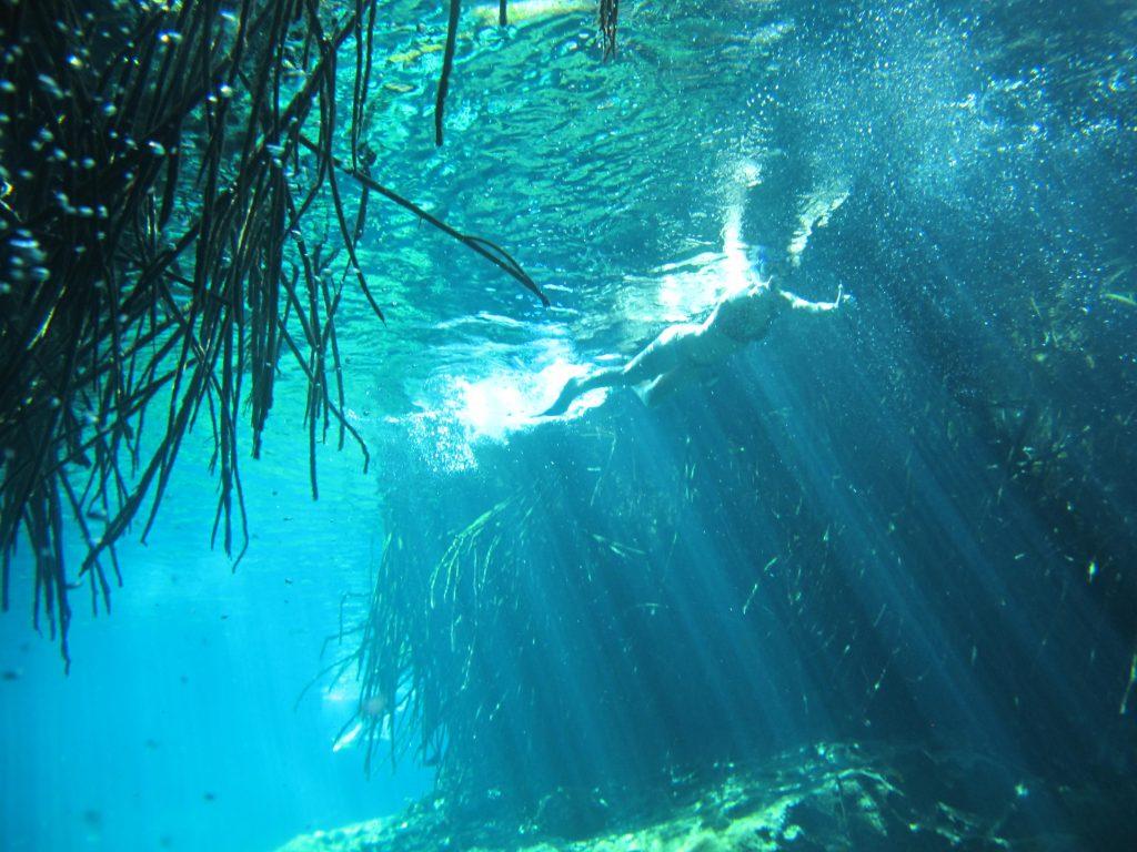 underwater photo of mangove