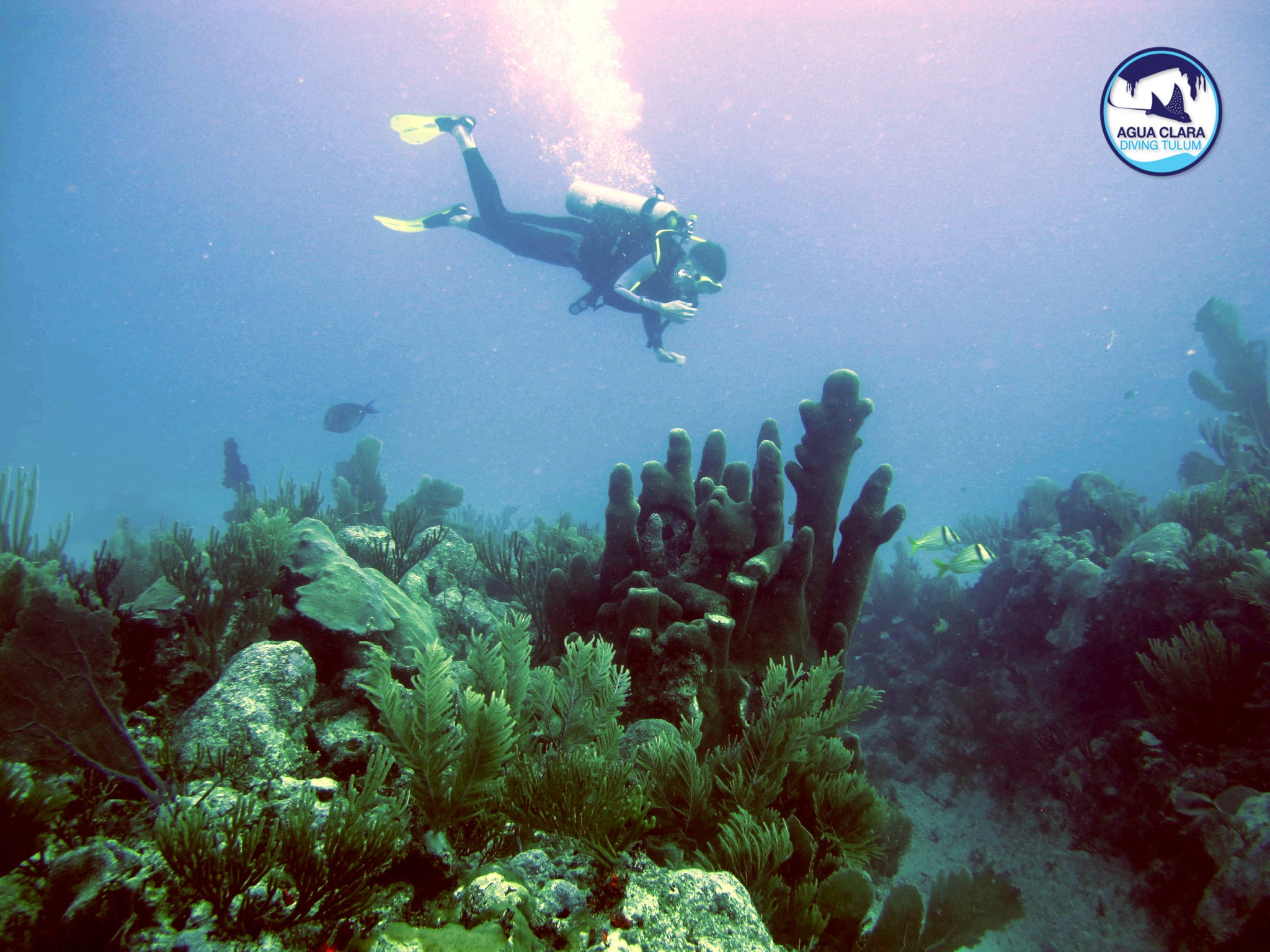 diving tulum's coral reef - diving tulum tours by agua clara - expolore the reef of the mayan riviera