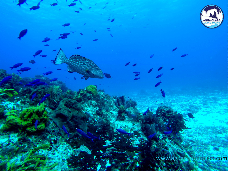 reef ocean diving tulum mexico