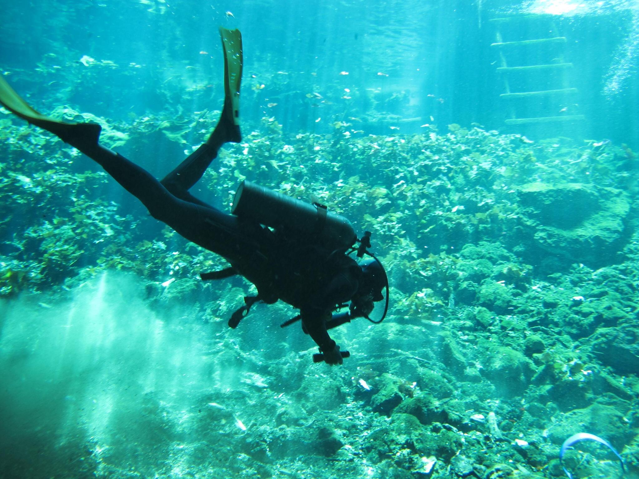 Underwater garden gran cenote