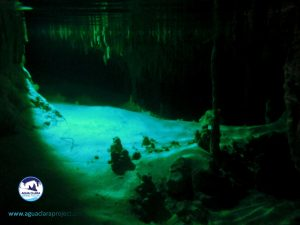 cenote formations pet cemeterry cenote