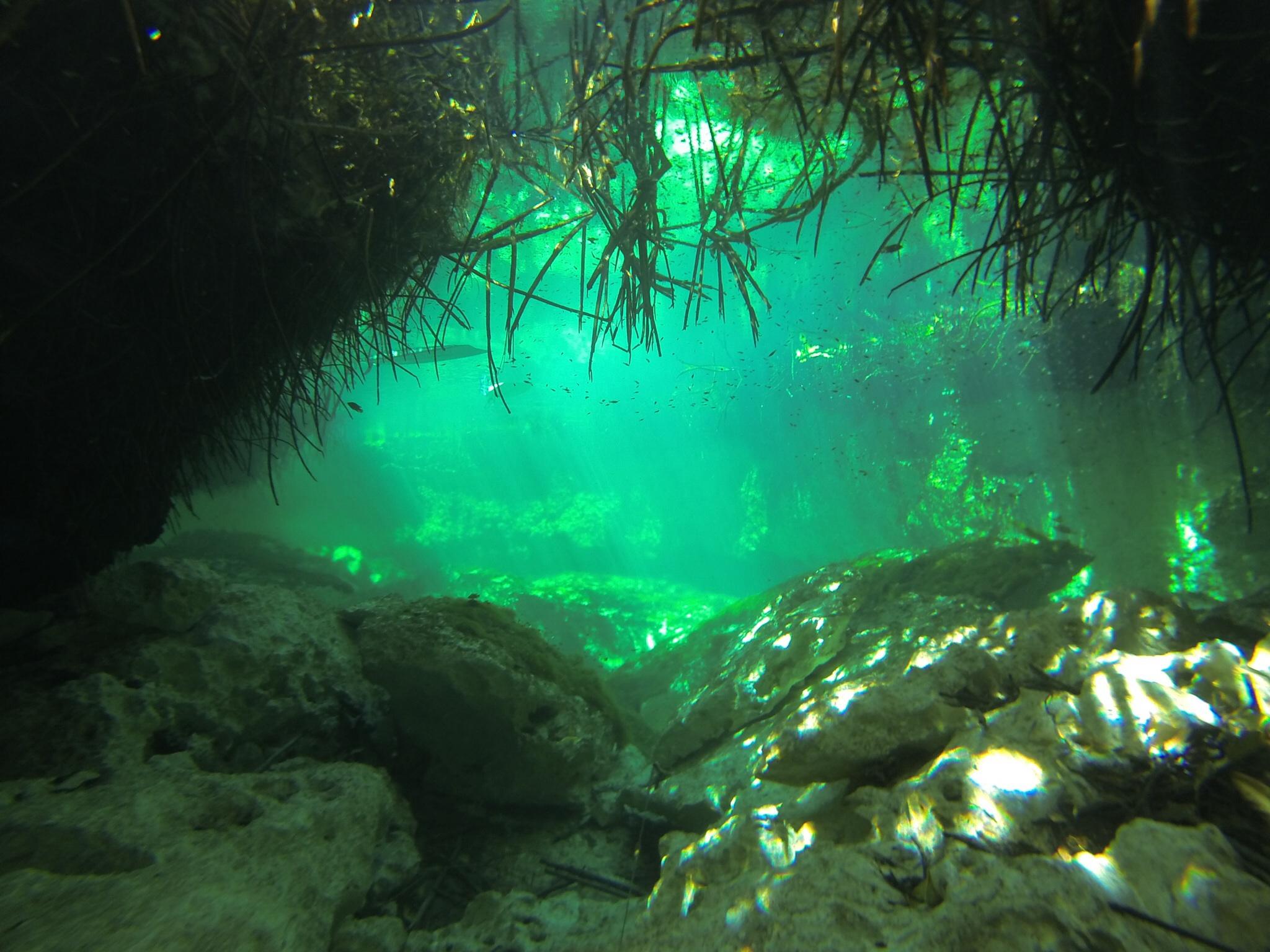 diving casa cenote tulum mangrove