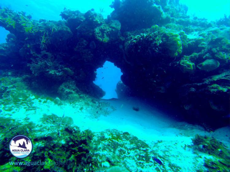 reef bridge cozumel