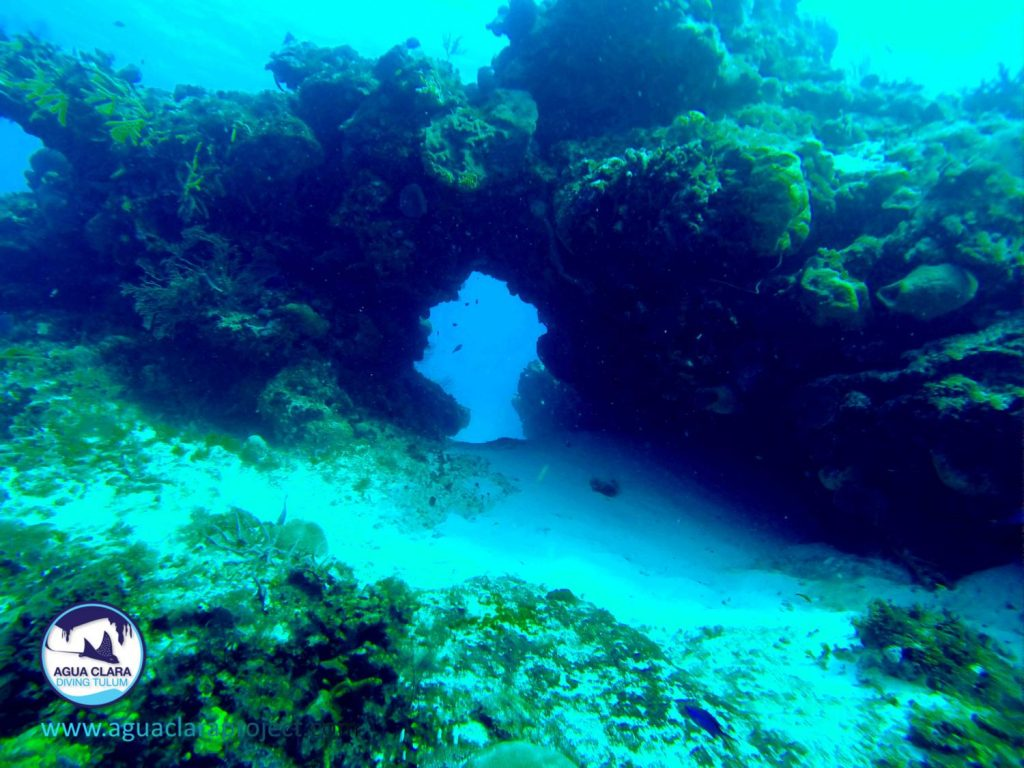 Diving cozumel from tulum - Cozumel dive sites ...