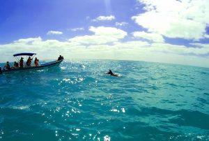 dolphin, Punta Allen