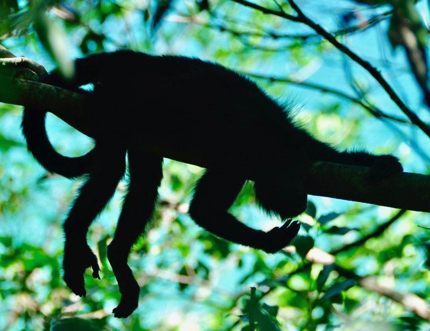 Punta Lagunas, Tulum, Mokeys, Eco Tour