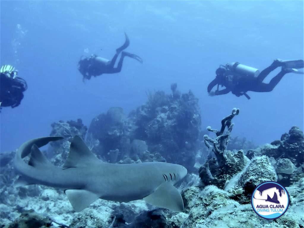 SHARK DANCE CHINCHORRO